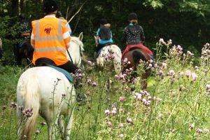 paarden in het veld 1